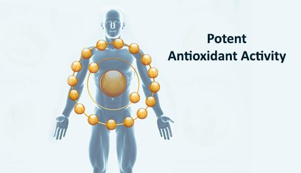 Potent Antioxidant Activity