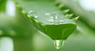 Benefits of Aloe Vera for Skin, Hair and Health