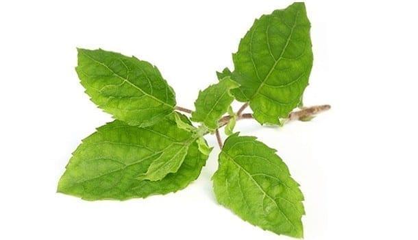 Tulsi leaf