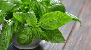 Benefits of Basil for Health and Skin