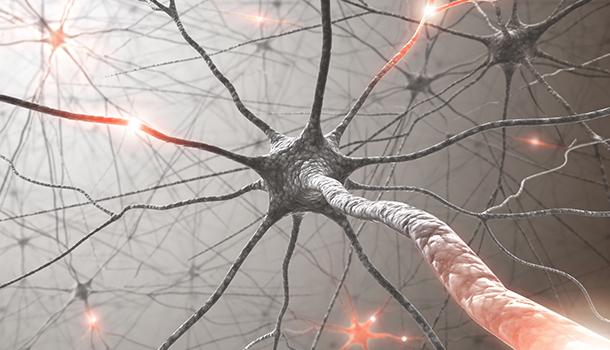 Advances the Nervous System