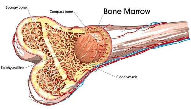Knowledge Of Bone Marrow