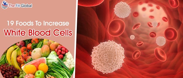 Foods To Increase White Blood Cells