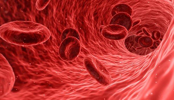 Mushrooms can heal anemia